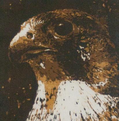 Falcon | woodcut | 13x18cm | 2020