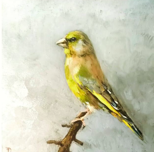 Greenfinch | oil painting | 15x15cm | 2021 (sold)