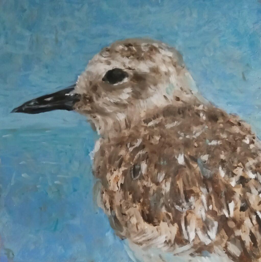 Plover | oil painting | 20x20cm | 2021